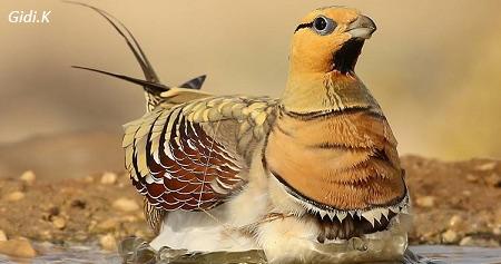 www.birds.org.il